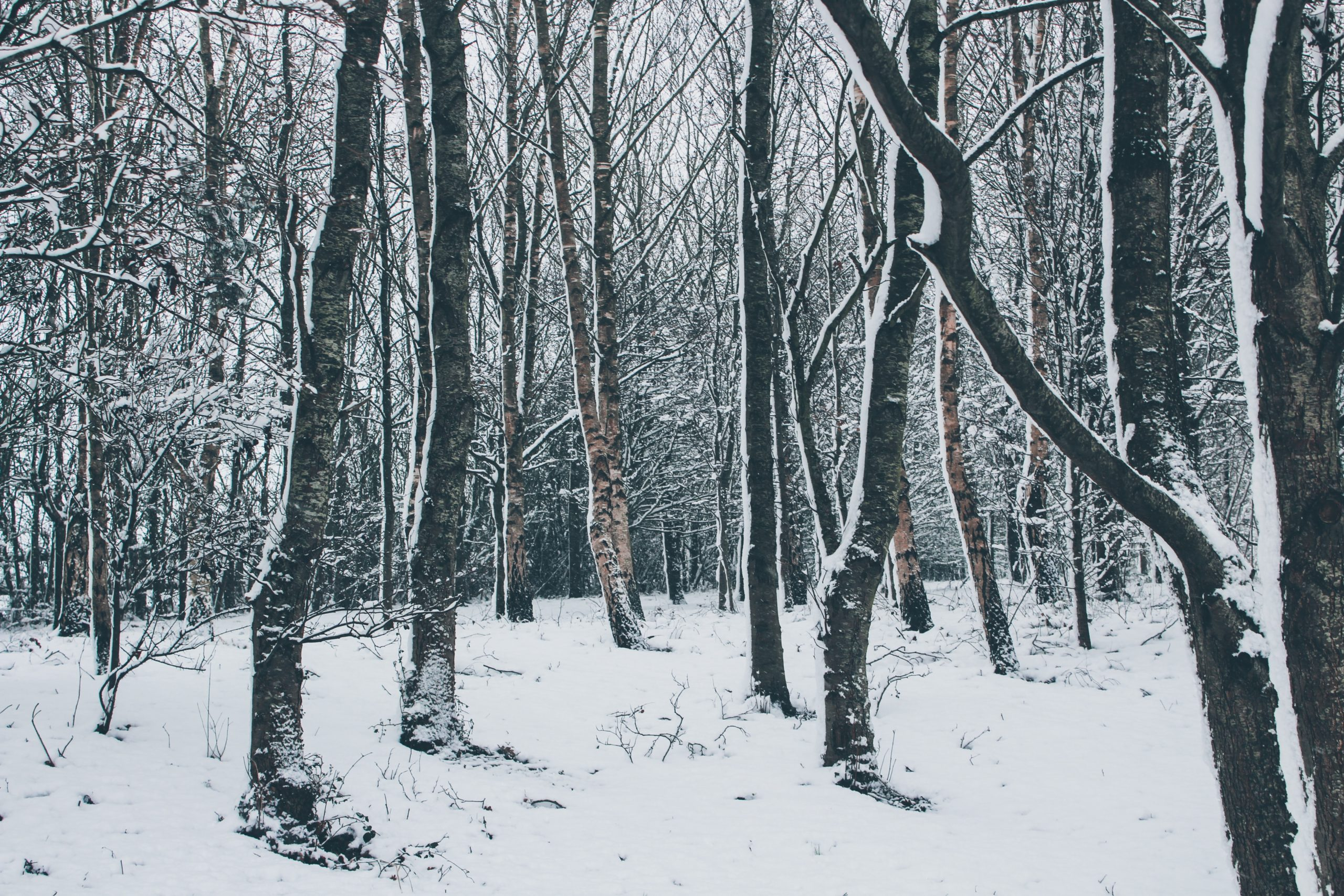 winter-seasonal-depression